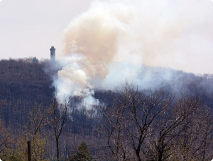Brush fire in Lower Alsace
